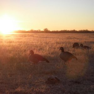 Nebraska Goose Hunting - Goose Down Outfitters